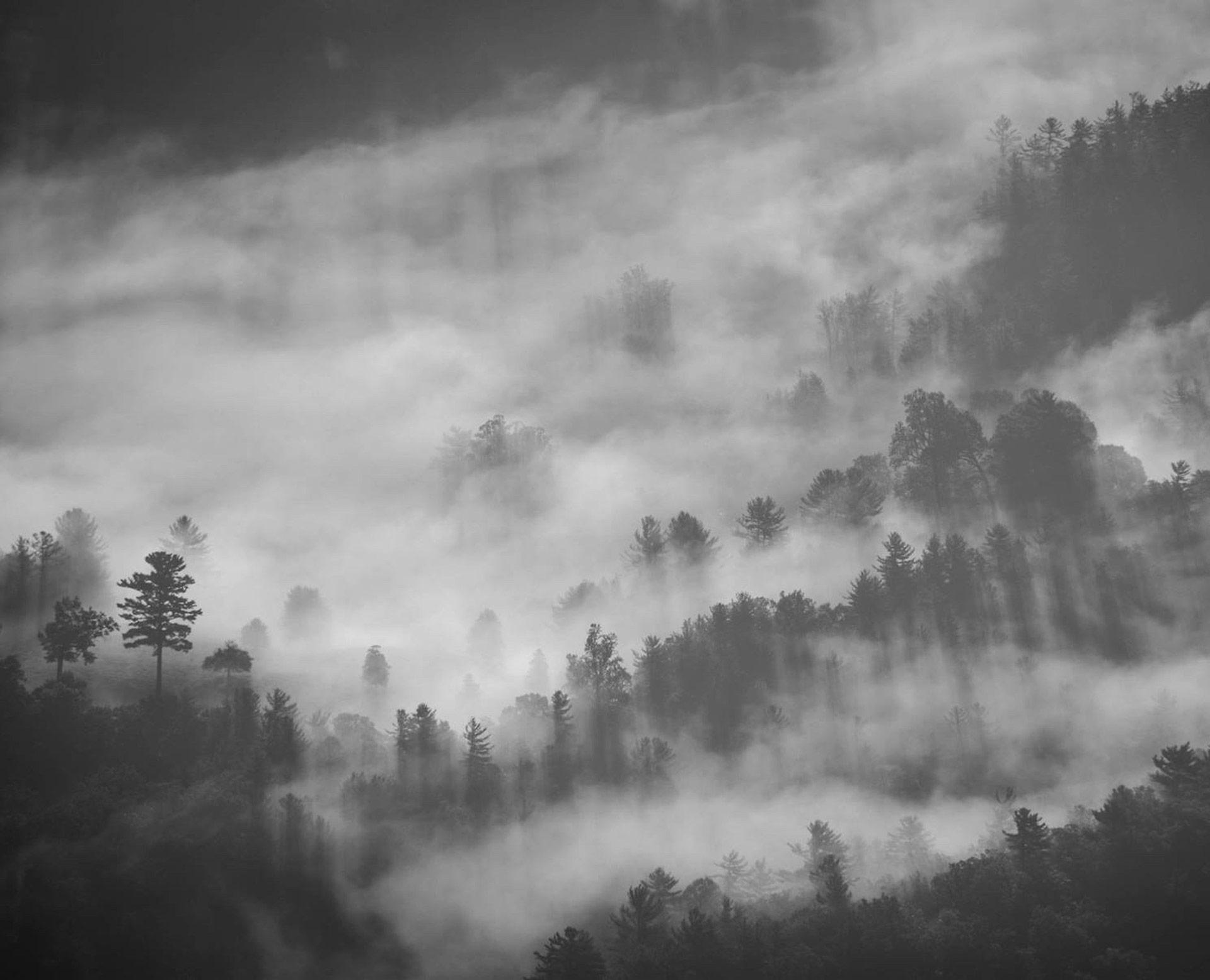 Immagine della foresta incantata - Le Cronache Dei 5 Regni - Elvio Ravasio, Autore di libri fantasy